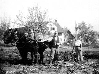 Im Herner Horgen Pflug mit Pferden um 1940